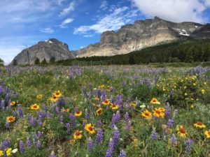 glacier park women's retreat wildflowers